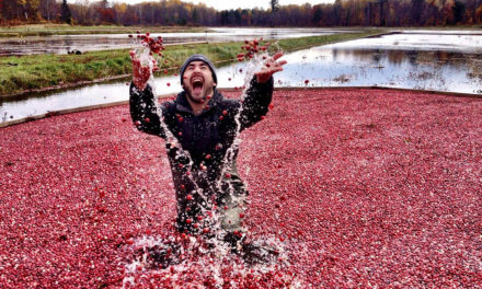 Bala Cranberry Festival – a Tasty Treat!