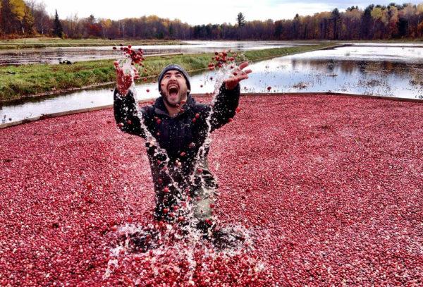 Cranberry Marsh Festival