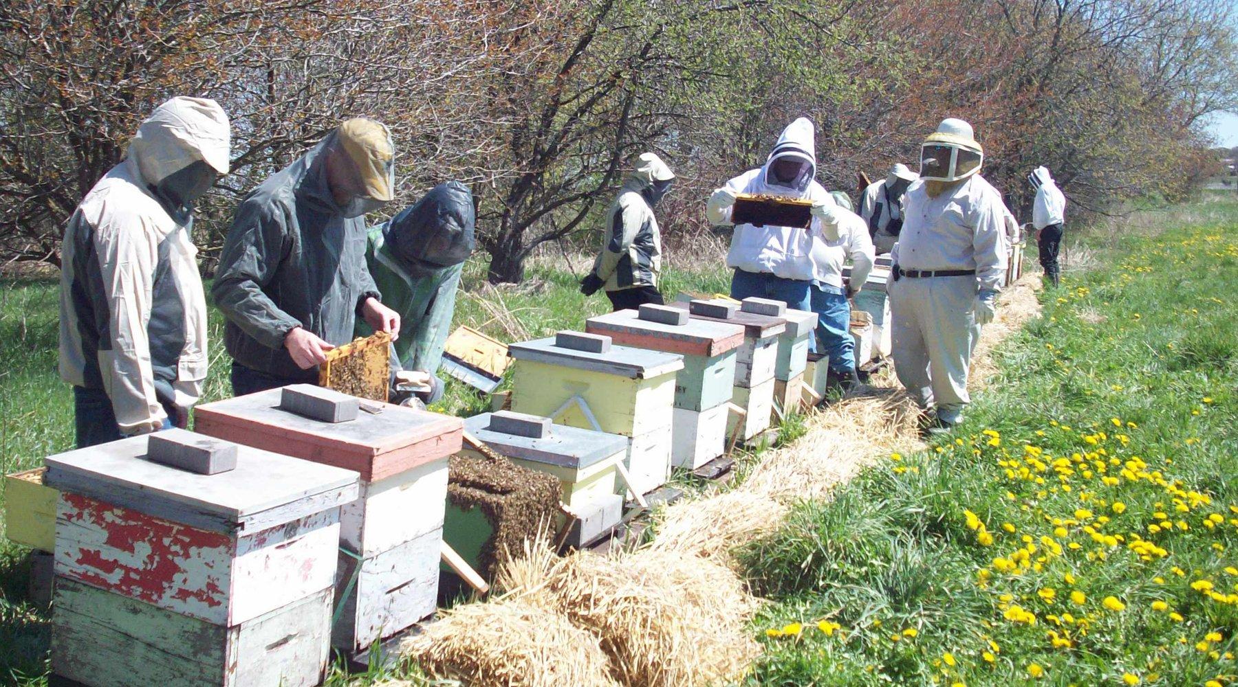 Tour of Dickey Bee Honey