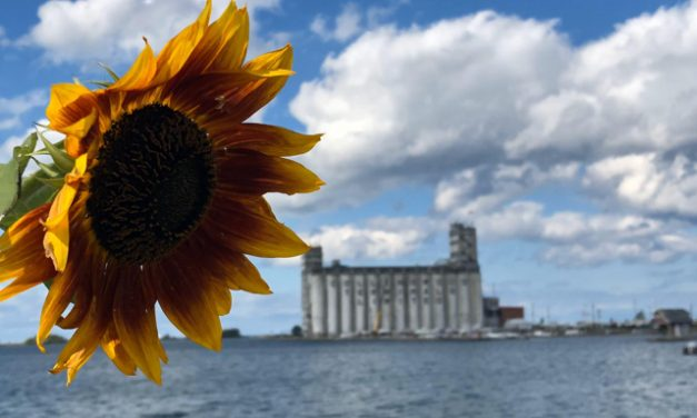 Sunflower and the terminal – by Cheryl May