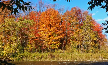 Fall on the Beaver – by Duncan Bristow