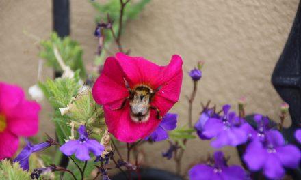 Nectar gathering…Michael Olejnik