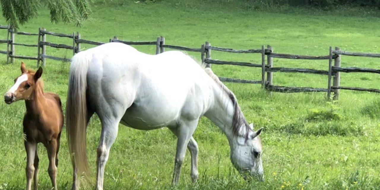 A fresh new foal…Rachel May