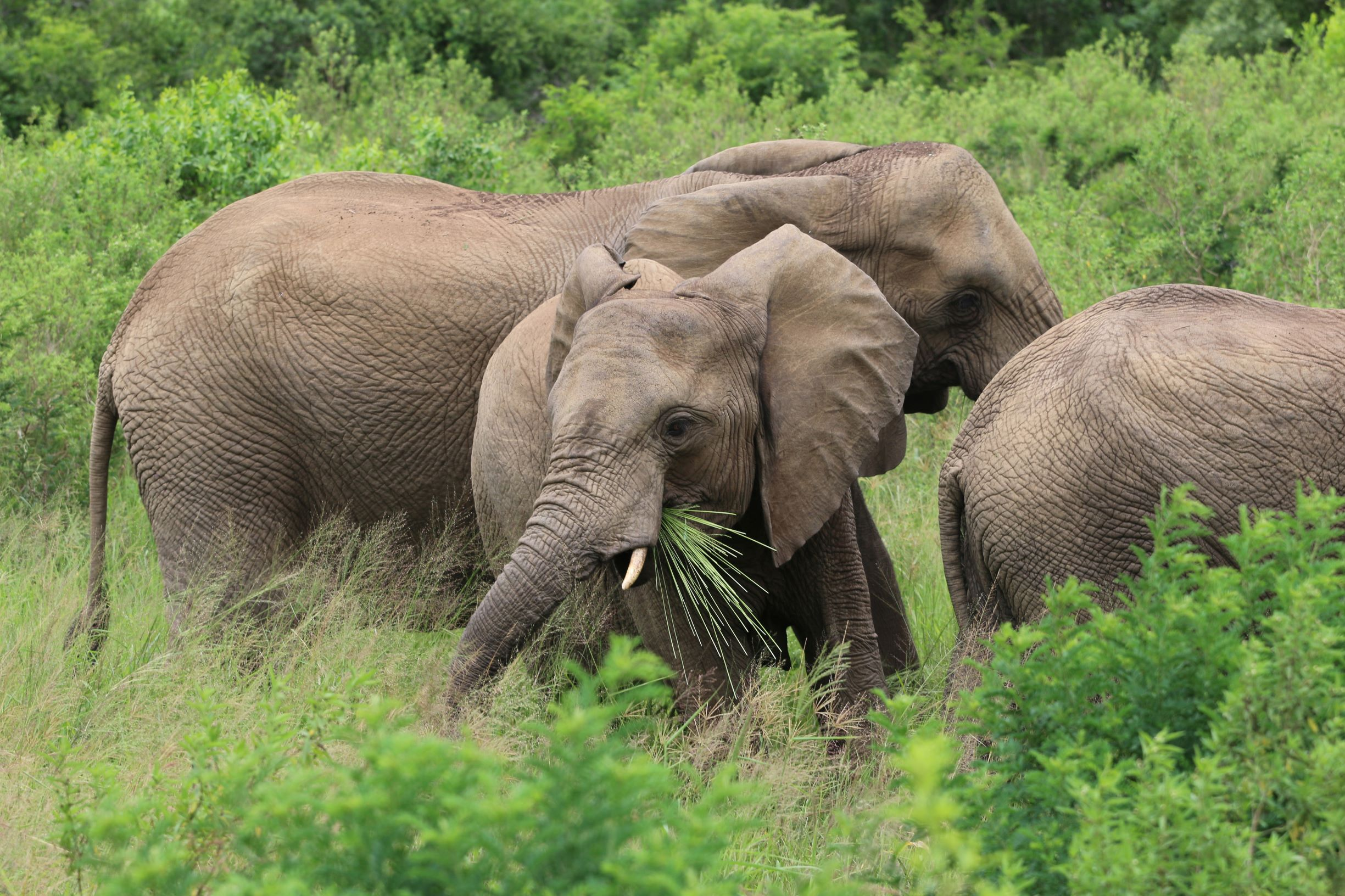 Elephants in Hluleka Game Reserve - Adrian O'Connor