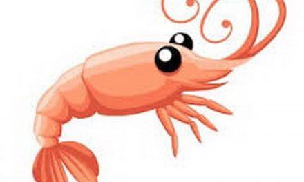 Chipotle Shrimp with a BIG Taste!